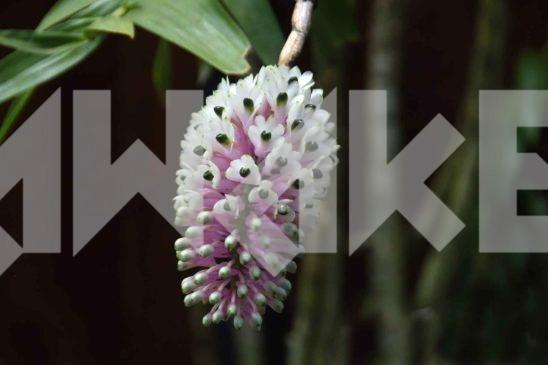 Beautiful Flower 31 Small