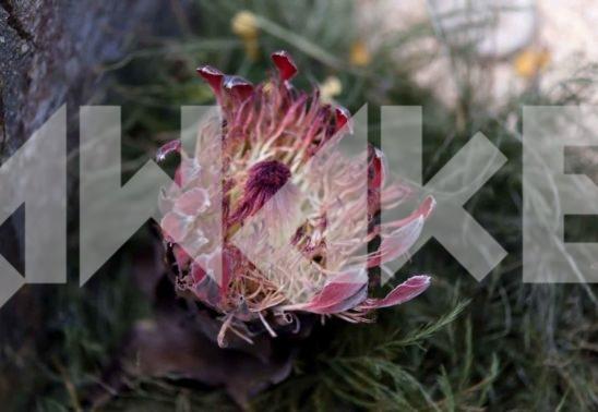 Beautiful Flower 33 Small