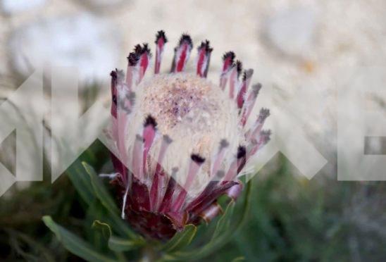 Beautiful Flower 34 Small