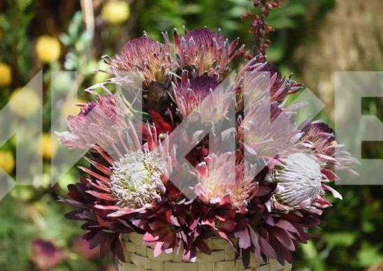 Beautiful Flower 35 Small