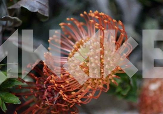 Beautiful Flower 36 Small