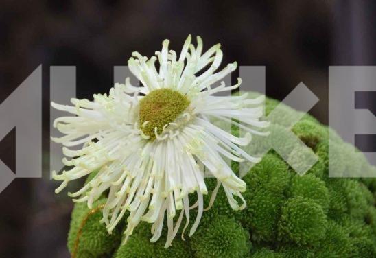 Beautiful Flower 38 Small
