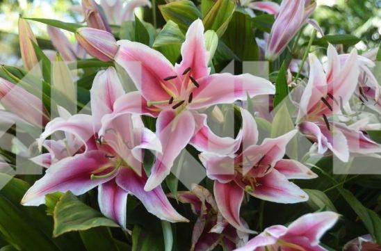 Beautiful Flower 41