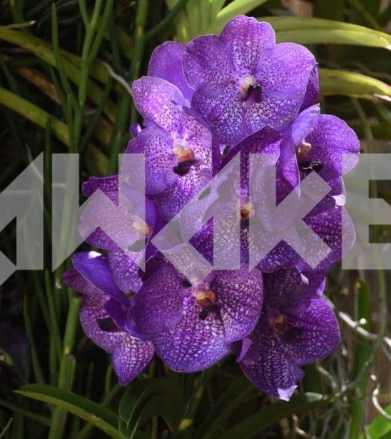 Beautiful Flower 42 Small