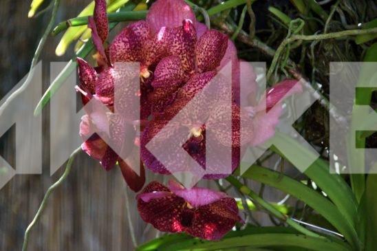 Beautiful Flower 44 Small