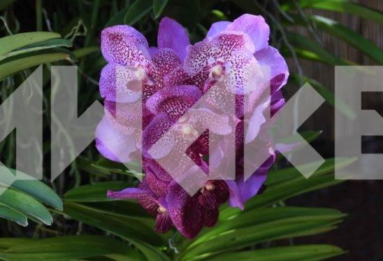 Beautiful Flower 46 Small