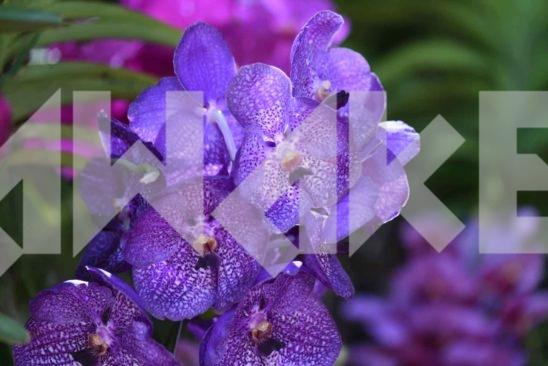 Beautiful Flower 47 Small