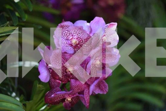 Beautiful Flower 48 Small