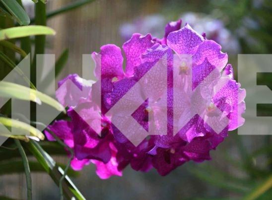 Beautiful Flower 49 Small