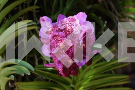 Beautiful Flower 50 Small