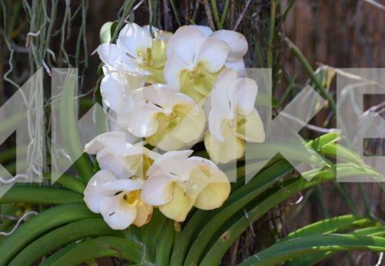 Beautiful Flower 52 Small