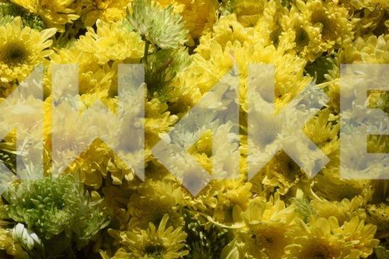 Beautiful Flower 53 Small