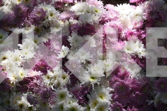 Beautiful Flower 54 Small