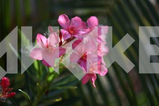 Beautiful Blossom 5 Small