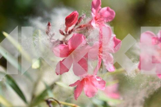 Beautiful Blossom 8 Small