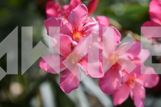 Beautiful Blossom 10 Small