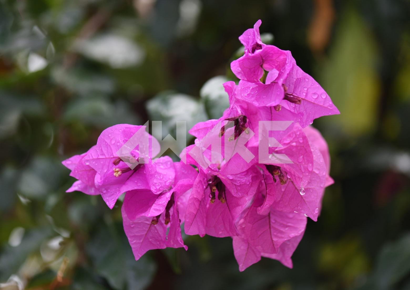 Beautiful Blossom 73