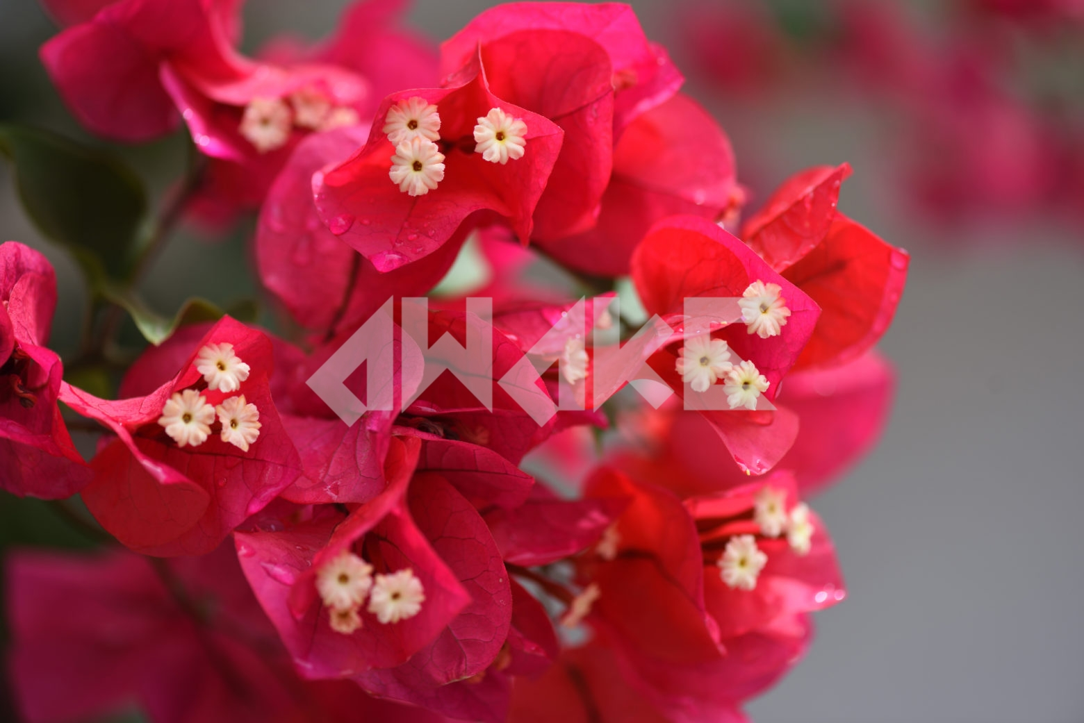 Beautiful Blossom 77